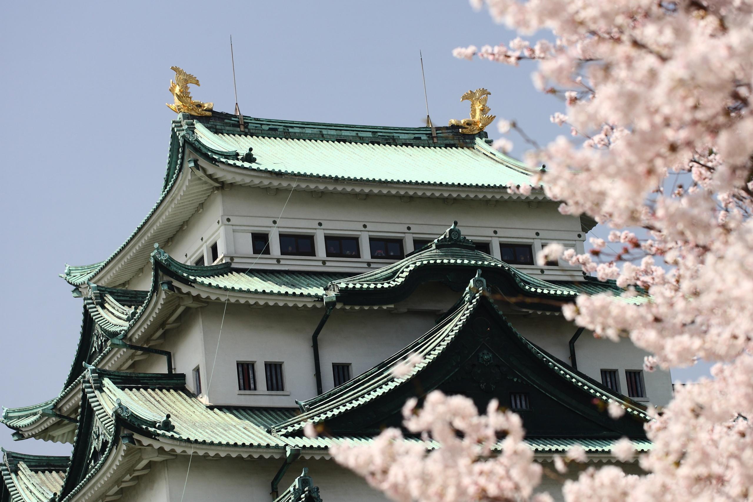 春の青空と満開の桜と名古屋城天守閣