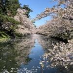 弘前城の花筏